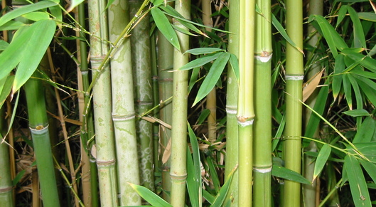 Partner show bamboo forest
