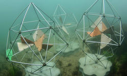 Browse partner high complexity reef pod environment