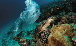 Browse partner img 117397 sea turtle and plastic bag underwater s