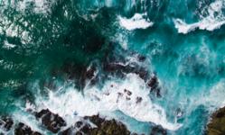 Browse partner ocean